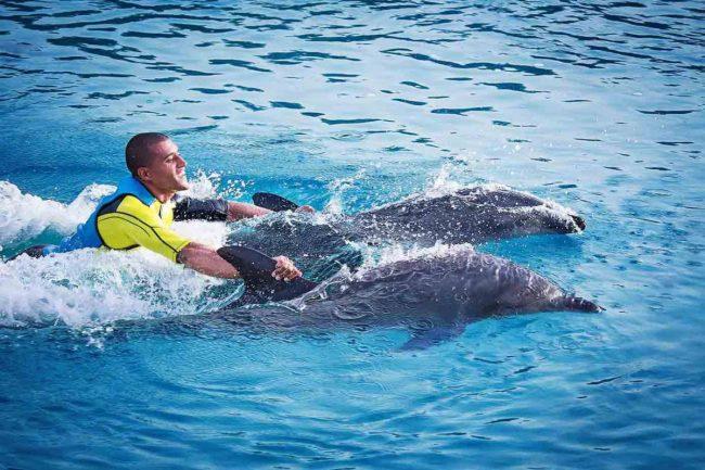 اللعب مع الدلافين