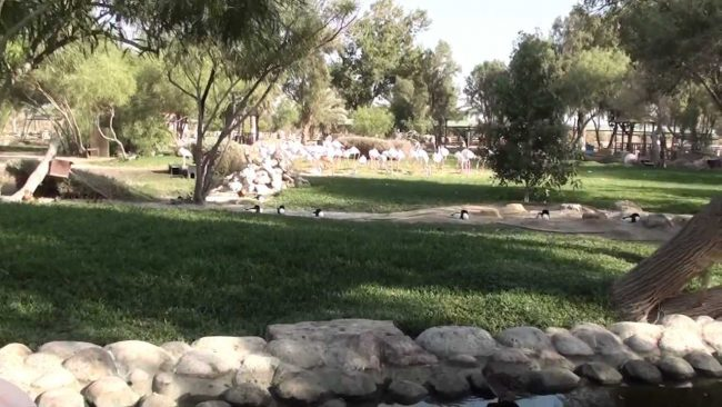 حديقة ومحمية العرين