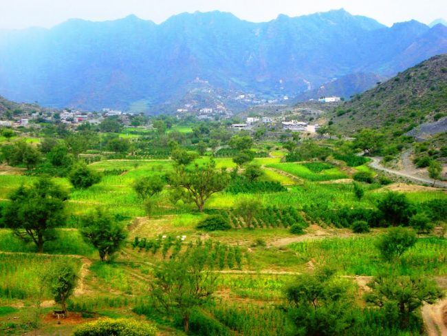 وادي عرعر
