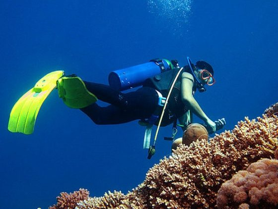 desert sea divers jeddah