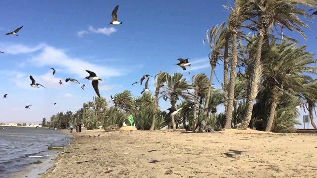 tourism in umluj saudi arabia 1