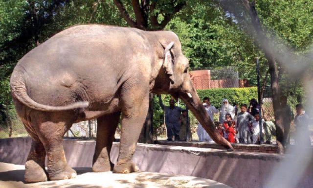 Marghazar (Islamabad) Zoo