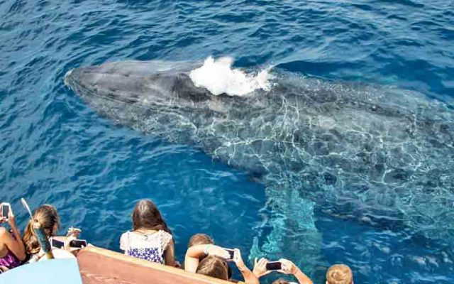 San Diego Whale Watching Cruises