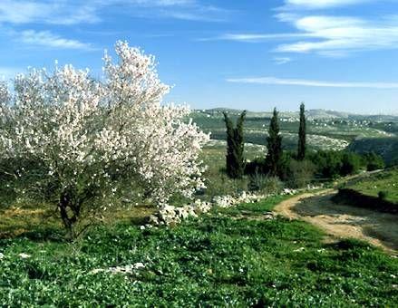 garden in Irbid, Jordan
