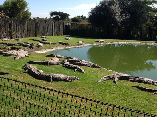 Croc City Crocodile & Reptile Park