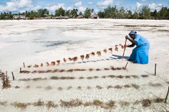 Zanzibar Seaweed Center