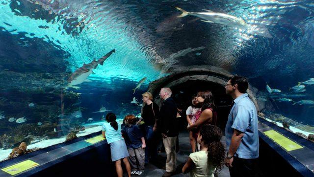 aquarium of reunion island