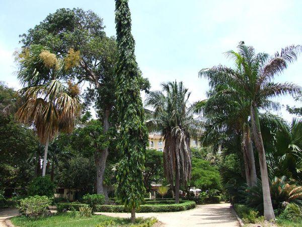 botanical garden dar es salaam
