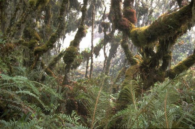 reunion cloud forests