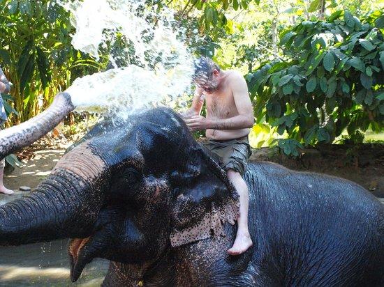 Elephant Junction Thekkady