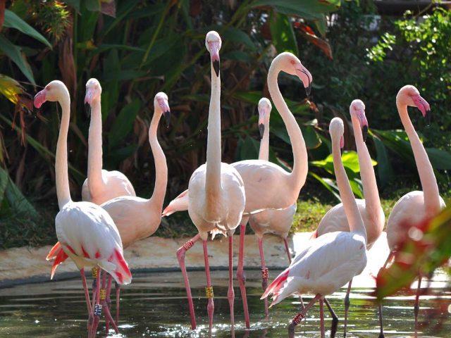 Limassol Zoo larnaca