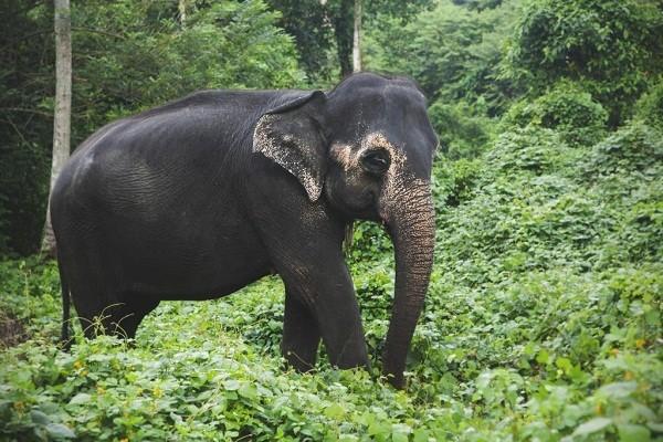 Millennium Elephant Foundation kandy