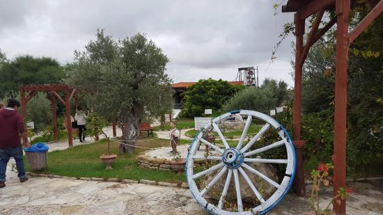 Oleastro Olive Park & Museum