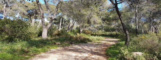 Pinar de Nagüeles park marbella Spain