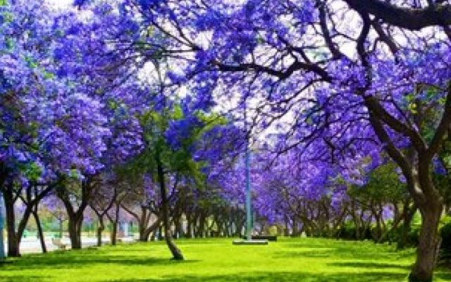 حديقة الأندلس