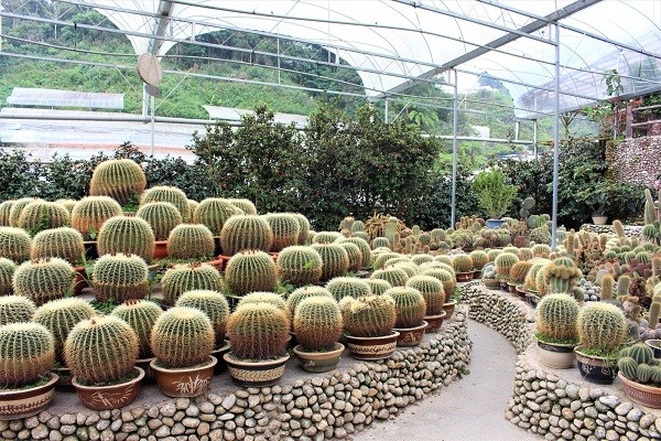 cactus valley cameron highlands