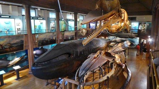 natural history museum gothenburg