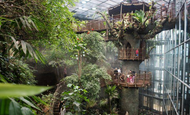 rainforest at Universeum
