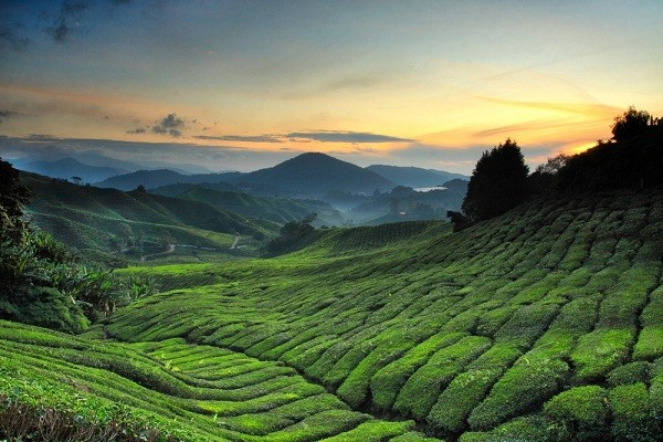 tourism in Cameron Highlands