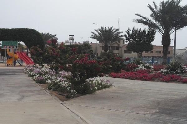 الأشجار والنباتات الملونة في حديقة الورود بالخبر