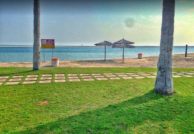 شاطئ النخيل المملكة العربية السعودية